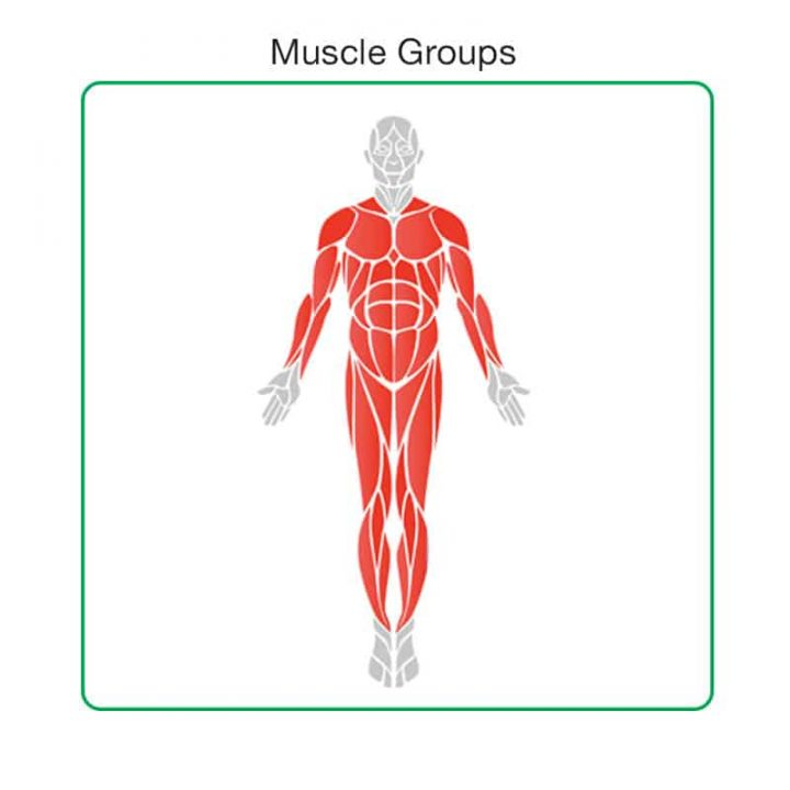 Muscle Groups
